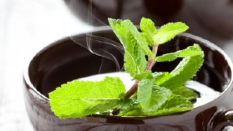 Secretele ceaiului de menta